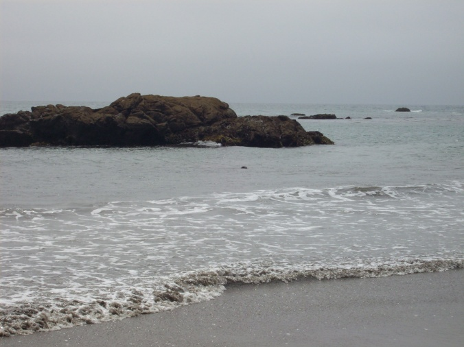Seal at Costanoa