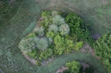 view of bushes from above