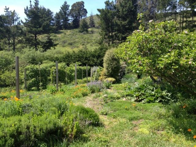 Green Gulch Gardens
