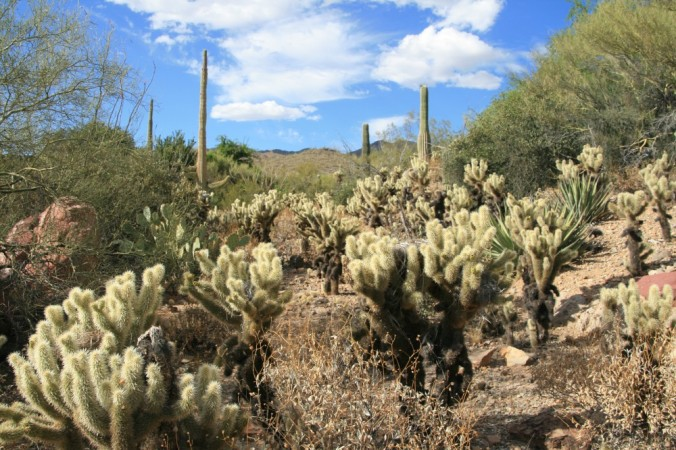 Arizona-Senora Desert Museum